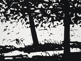 Maine Woods 1