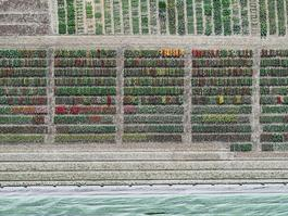 Aerial Views, Tulip Fields 08