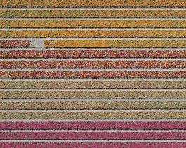 Aerial Views, Tulip Fields 16