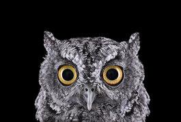 Western Screech Owl #1, Espanola, NM, 2011