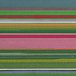 Aerial Views, Tulip Fields 14