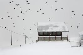 Ravens (Hokkaido), Blizzard 2 series