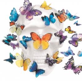 Vanité papillons 9467