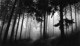 Fairmount Forest