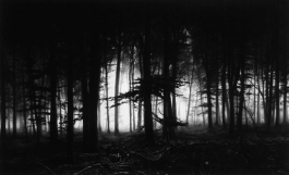 Forest of Doxa