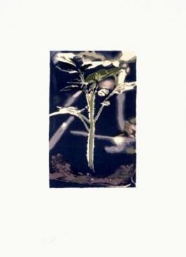 Plant (Gene)
