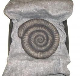 Snakestone