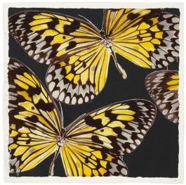 Monarchs, Jan. 24, 2006
