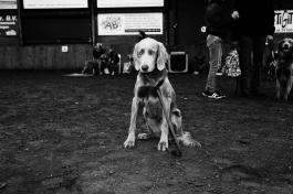 Life's A Dog Show 2