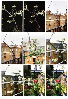 Process (apple tree) (2012)