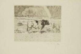 Taureau Dans Un Pré / Bull In A Meadow