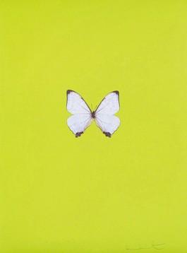 Six Butterflies II