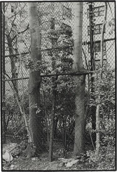 Zoe Leonard-Two Trees-1998
