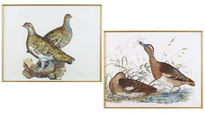 John Prideaux Selby-Two Hand-Colored Etchings: 'Gargany Teal' and 'Ptarmigan'-