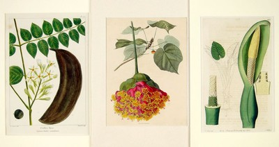 A Collection of 19th Century Botanical Prints-