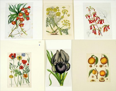 A Collection of 18th and 19th Century Botanical Prints-