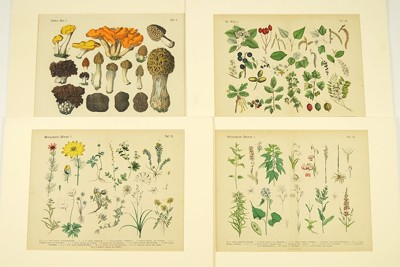 A Collection of 19th Century German Botanicals-