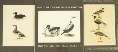 A Collection of 18th and 19th Century Bird Prints-