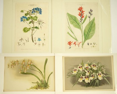 Johann Sebastian Muller-Two Botanical Prints-1774