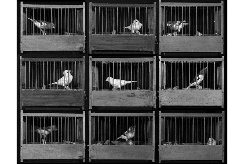 Gabriele Rothemann, Vierundzwanzig Vogelkäfige [24 bird cages], Installation, 2009