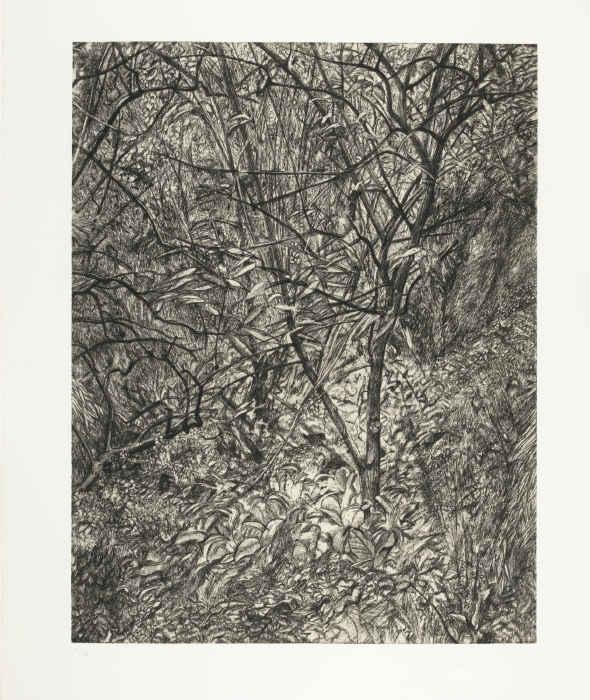 Lucian Freud-Garden In Winter (F. 97)-1999