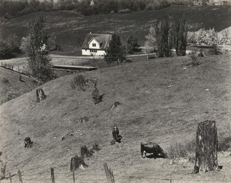 Edward Weston-Columbia River, Oregon-1939