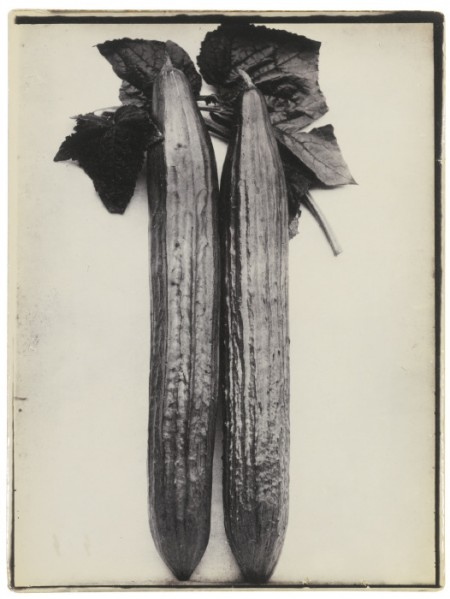 Charles Jones-Cucumber Telegraph-1900