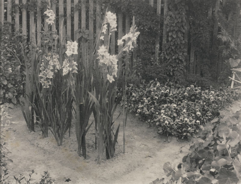 William B. Post-Selected Images (Cottage and Blossom, Water Lily Pads, Garden with Gladiolus)-1920