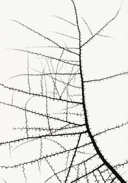 George Tice-Trees-1965