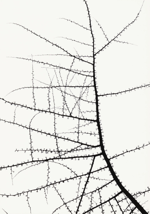 George Tice-Trees-1965