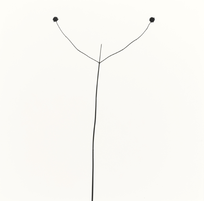 Harry Callahan-Weed Against Sky, Detroit-1947