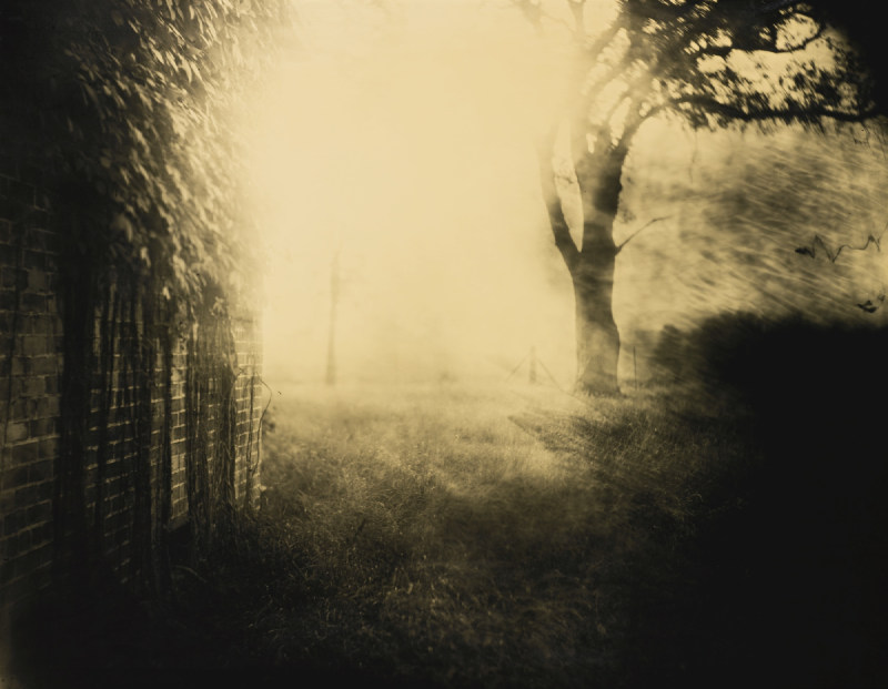 Sally Mann-Untitled (Deep South #41)-1998
