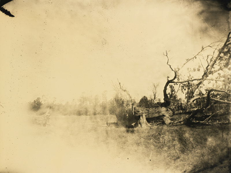 Sally Mann-Untitled (Deep South #06)-1998