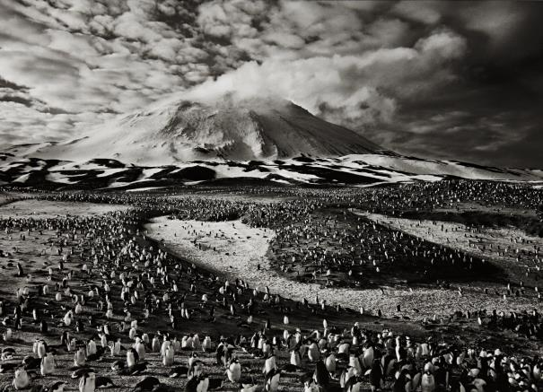 Sebastiao Salgado-Macaroni Penguins In Zavodovski Island, The Sandwich Islands-2009