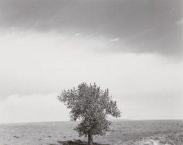 Robert Adams-Pawnee National Grassland, Colorado-1984