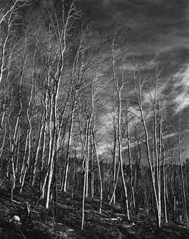 Edward Weston-Aspen Valley, New Mexico-1937
