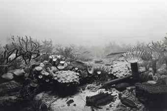 Hiroshi Sugimoto-Devonian Period-1992