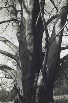 Charles Sheeler-Copper Beech-1952