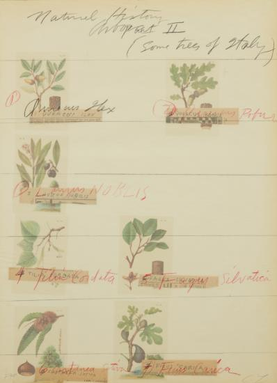 Cy Twombly-Title Print, From Natural History Part Ii Some Trees Of Italy-1976