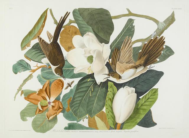 John James Audubon-After John James Audubon - Black-billed Cuckoo (Pl. XXXII)-1828