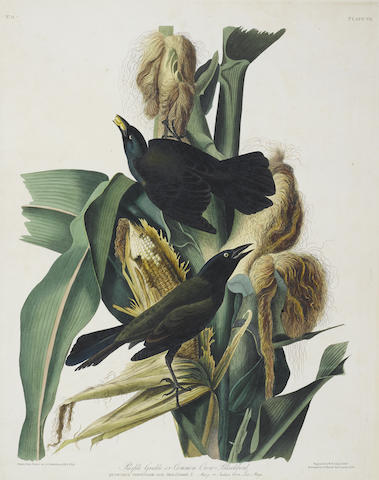 John James Audubon-After John James Audubon - Purple Grackle or Common Crow Blackbird (Pl. VII)-1829