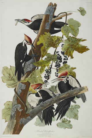 John James Audubon-After John James Audubon - Pileated Woodpecker (Pl. CXI)-1831