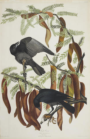 John James Audubon-After John James Audubon - Fish Crow (Pl. CXLVI)-1832