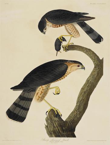 John James Audubon-After John James Audubon - Sharp-shinned Hawk (Pl. CCCLXXIV)-1837