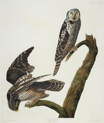 John James Audubon-After John James Audubon - Hawk Owl (Pl. CCCLXXVIII)-1837