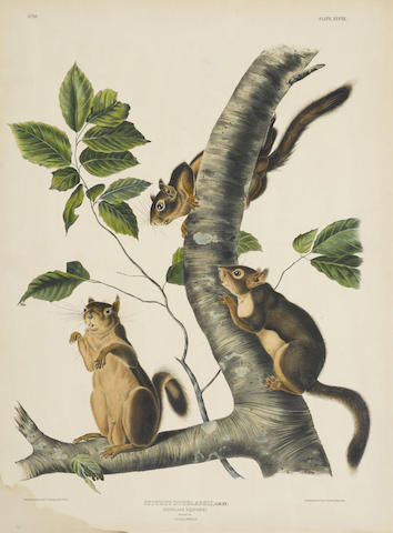 John James Audubon-After John James Audubon - Carolina Grey Squirrel (Pl. VII); Douglass Squirrel (Pl. XLVIII) 2-1844