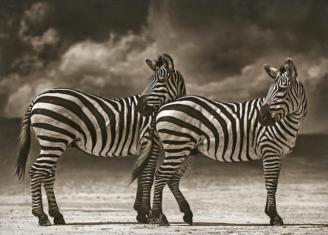 Nick Brandt-Two Zebras Turning Heads, Ngorognoro Crater-2005