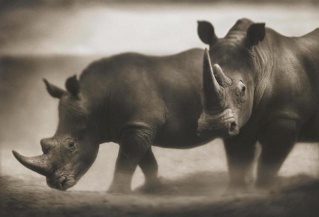 Nick Brandt-Rhinos, Lewa-2003