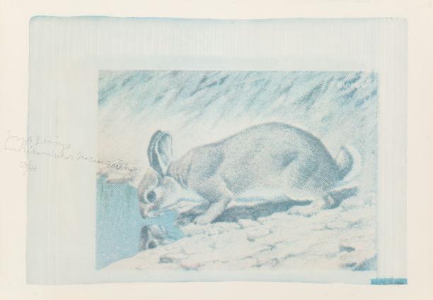 Joseph Beuys-Amerikanischer Hasenzucker (American Hare Sugar)-1974