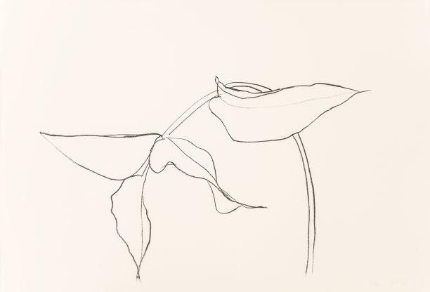 Ellsworth Kelly-Philodendron I-1984